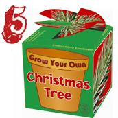 Grow Your Own Xmas Tree